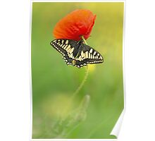Impression with butterfly and red poppy Poster