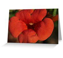 Red or Orange  Greeting Card