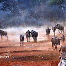 AFRICAN WINTER-SCAPE by Magriet Meintjes