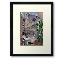 KOALA 'BILL' Framed Print