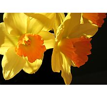 Daffy- down- dillies Photographic Print