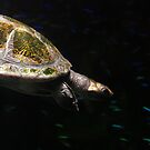 Turtle of the Sea by Lindsey McKnight