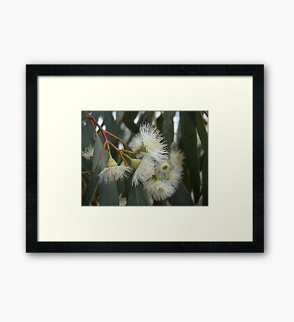 Gumnut Flowers Framed Print