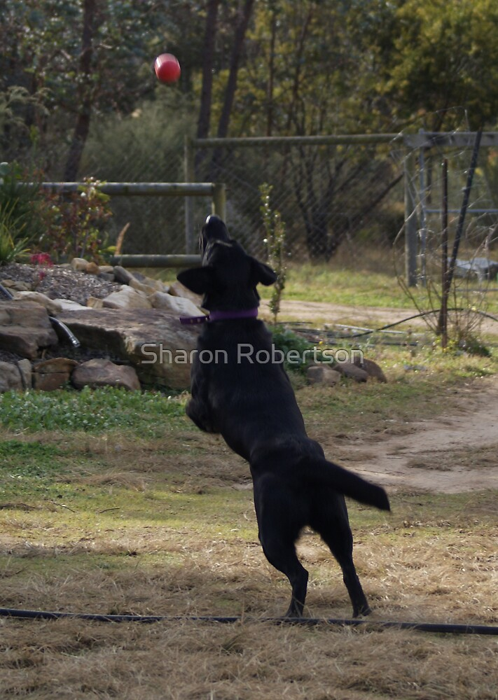 Quill get that ball by Sharon Robertson