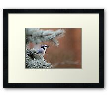 Haughty Blue Jay Framed Print