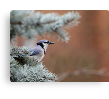 Haughty Blue Jay Canvas Print