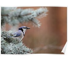 Haughty Blue Jay Poster