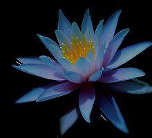 zen in lotus by alfarman