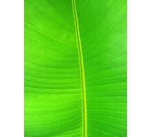 Vibrant Green Palm Photographic Print