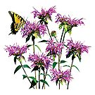 Tiger Swallowtail on Bee Balm by Susan Savad