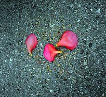 Three Fallen Petals by shelbu94