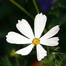 flower by Nixter