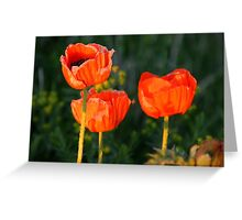 Sunset Poppies Greeting Card