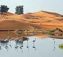Sand Dune Flamingos by David Clark