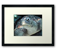 Green Turtle Eye Framed Print