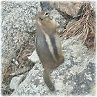 Chubby Chipmunk by Aleilani