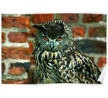 Eagle Owl -2 Poster
