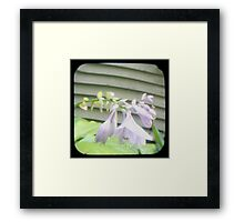 Hosta La Vista Framed Print