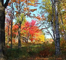 Autumn Forest Killarney Provincial Park by Debbie Oppermann