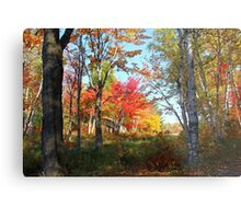 Autumn Forest Killarney Provincial Park Metal Print