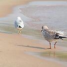 Gulls on the move by amberzimmerman