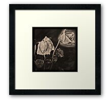 Portrait of a Dying Rose Framed Print