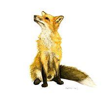 Fluffy  Fox by TheTreeHearts