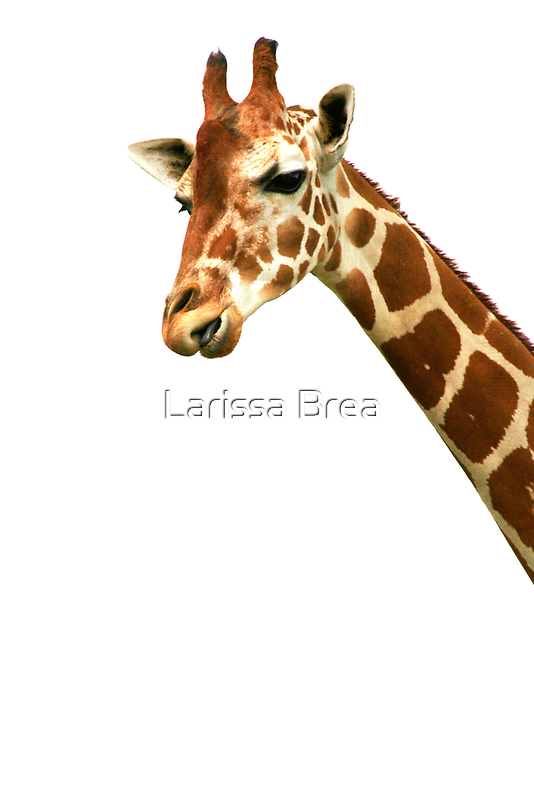 From up here by Larissa Brea
