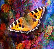 Colorful Butterfly by lldd11