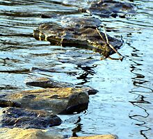 Rock in stream by Gotcha  Photography