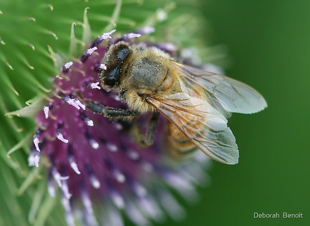 Thistle Bee by Deborah  Benoit