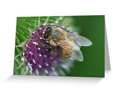 Thistle Bee Greeting Card