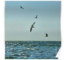 Sea Scape Poster