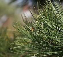 Wasp on a Pine needle by Neil Grainger