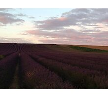Lavender lines & lilac skies Photographic Print