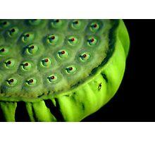 Nips Bug Hub Photographic Print
