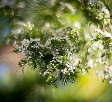 Blossom by Mel Brackstone