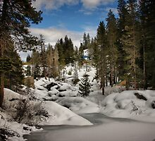 Winter Wonderland by Barbara  Brown