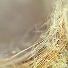 Nest by Trish Mistric