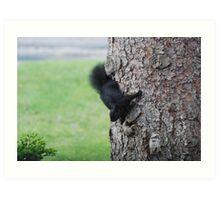 Baby Black Squirrel Art Print