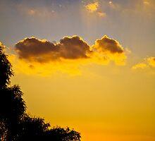sun of templestowe by Rosina  Lamberti