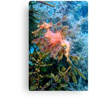 Dragons of the Sea. Canvas Print