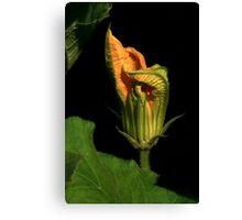 Pumpkin Vine Flower Canvas Print