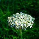 Flowers for Reta by Jim Caldwell
