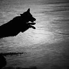 Dark Leap by Robert Goulet