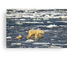 Polar Bears: Mother & Cub Struggling in Hudson Bay, Canada  Canvas Print