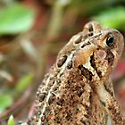 The Toad by tdeuel98