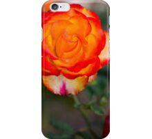 Rose - Pevensy Park Geelong iPhone Case/Skin