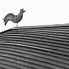 Curvy Cockerel by Colin S Pearson