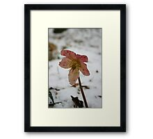 Snow Flower Framed Print